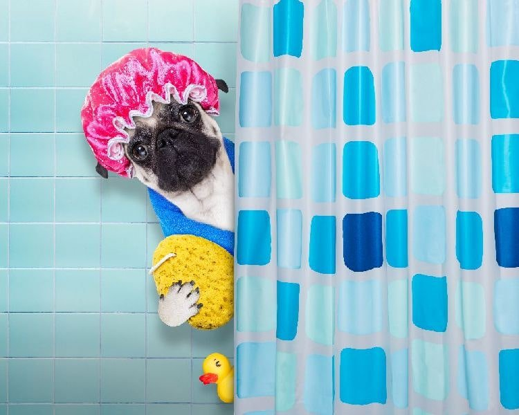 Shower Curtain Buying Guide